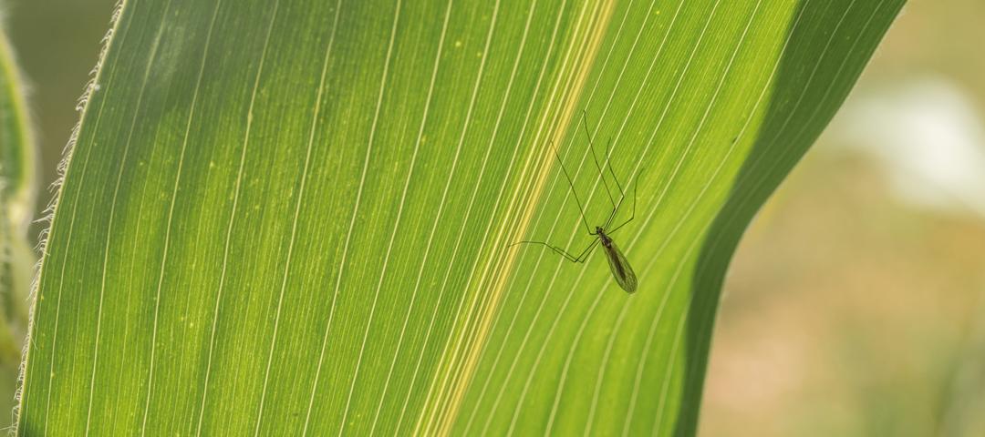 cambio climatico mosquito